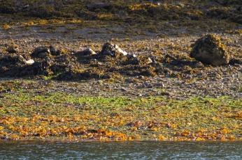 009 2014.06.13 Dolphin Island