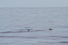 029 2014.06.11 Hecate Strait