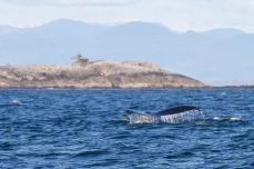 156 2014.06.10 Hecate Strait