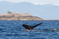 159 2014.06.10 Hecate Strait